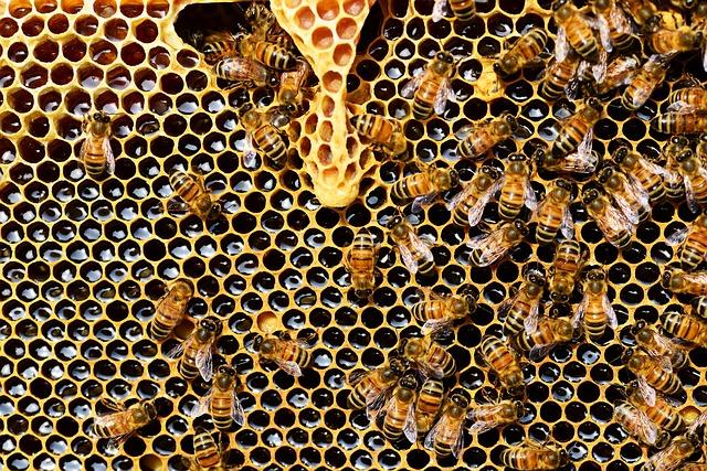 včely na plástvi