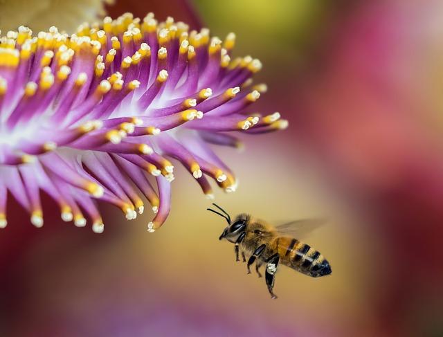 včela a květ