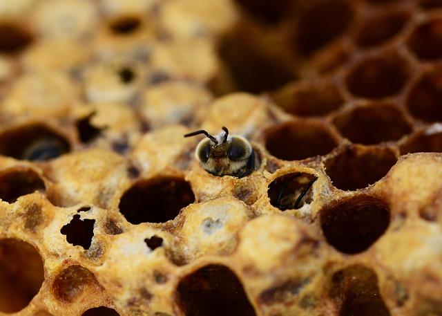 včela líhnutí